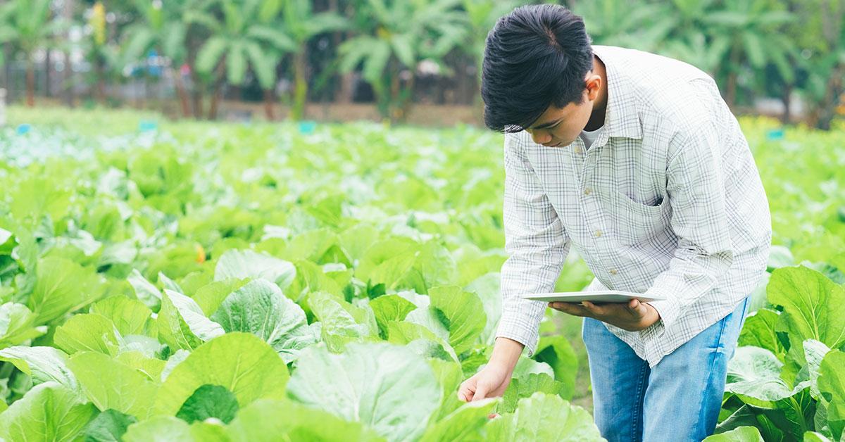 Cos'è la smart agriculture? Come ridisegna il settore agricolo in chiave produttività e sostenibilità?